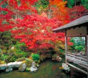 画像:10月 常照皇寺(京都) 日本の美 2020年カレンダー