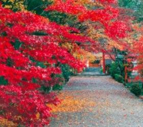 画像:11月 大原野神社(京都) 日本の美 2020年カレンダー