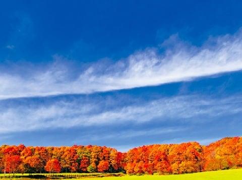 画像:11月 すじ雲と紅葉 SORA - 空 -  2020年カレンダー