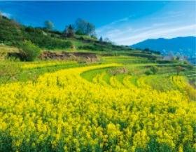 画像:3月 明日香村(奈良) ザ・日本 2020年カレンダー