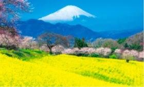 画像:4月 神奈川県 大井町 フォーエバージャパン 2020年カレンダー
