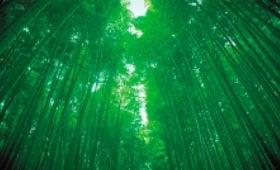 画像:5月 京都府 嵯峨野 フォーエバージャパン 2020年カレンダー