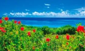 画像:8月 沖縄県 石垣島 フォーエバージャパン 2020年カレンダー