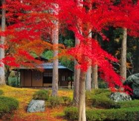 画像:9-10月写真 しょうざん(京都) 四季の庭 2020年カレンダー