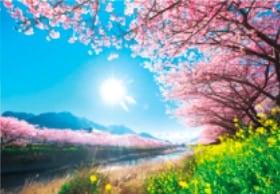 画像:4月 河津町(静岡) 輝く太陽 2020年カレンダー