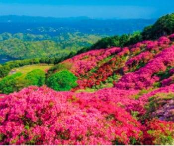 画像:5-6月 長串山公園のツツジ(長崎) 花紀行 2020年カレンダー