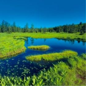 画像:7-8月 浮島湿原(北海道) 美しい水辺(フィルムカレンダー) 2020年カレンダー