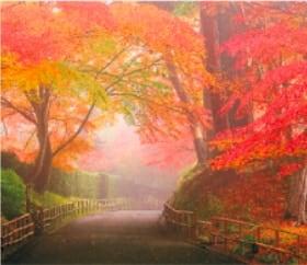 画像:9-10月 中尊寺(岩手) 日本の詩情(フィルムカレンダー・小) 2020年カレンダー