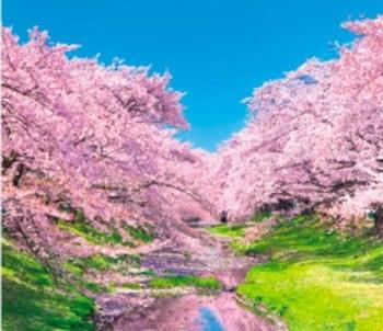 画像:3-4月 根川緑道(東京)」 せせらぎの詩(フィルムカレンダー・小) 2020年カレンダー