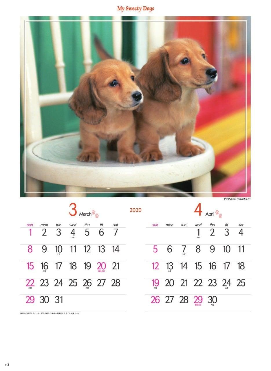 画像:ミニチュア・ダックスフンド マイスウィーティードッグ 2020年カレンダー