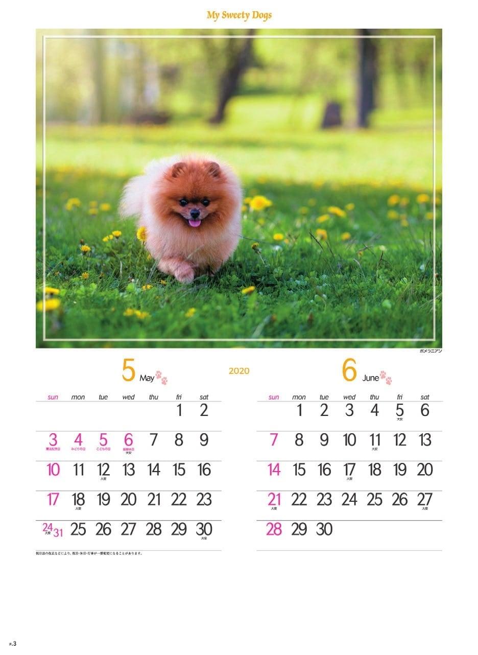 画像:ポネラニアン マイスウィーティードッグ 2020年カレンダー