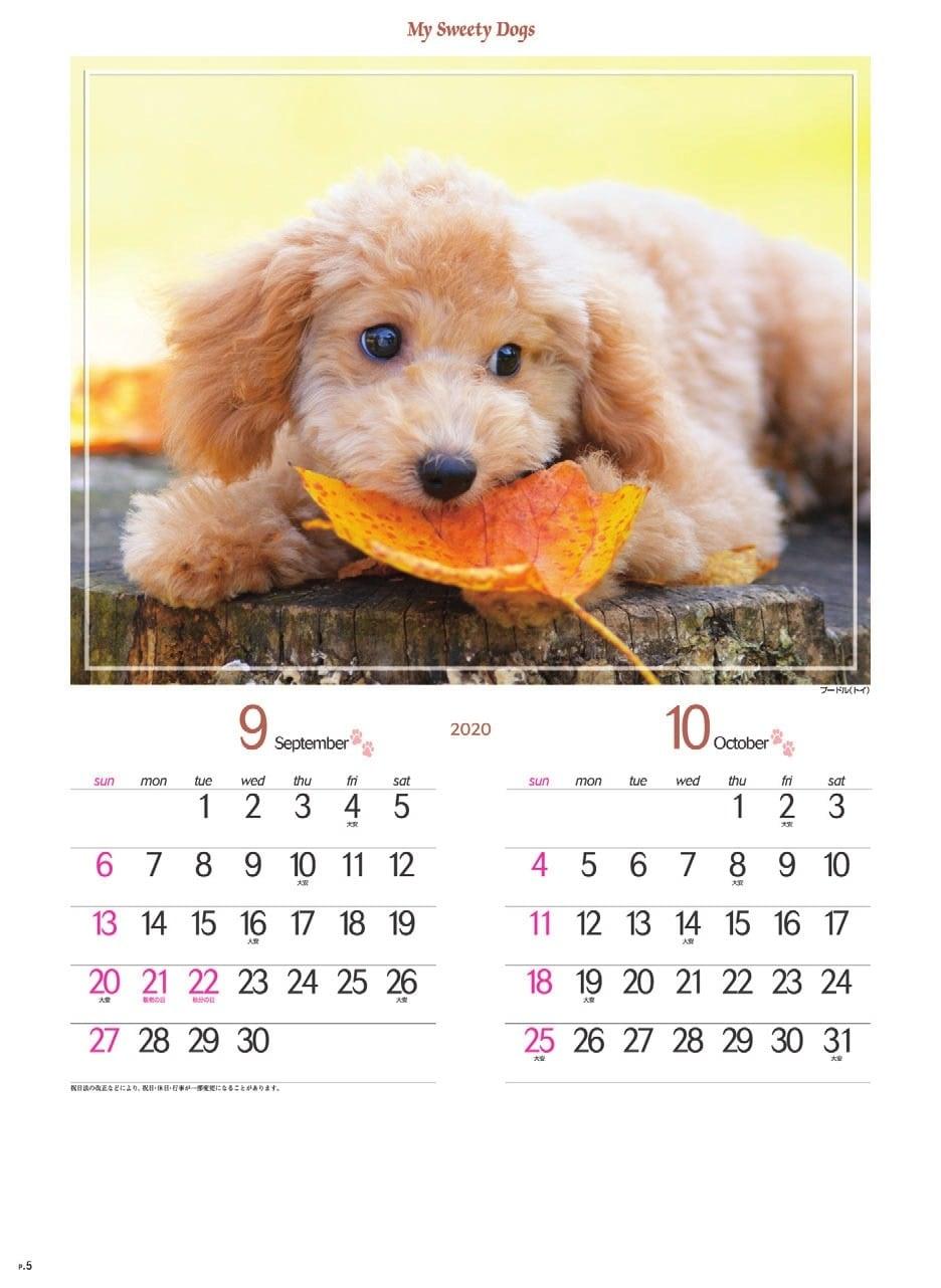 画像:トイプードル マイスウィーティードッグ 2020年カレンダー