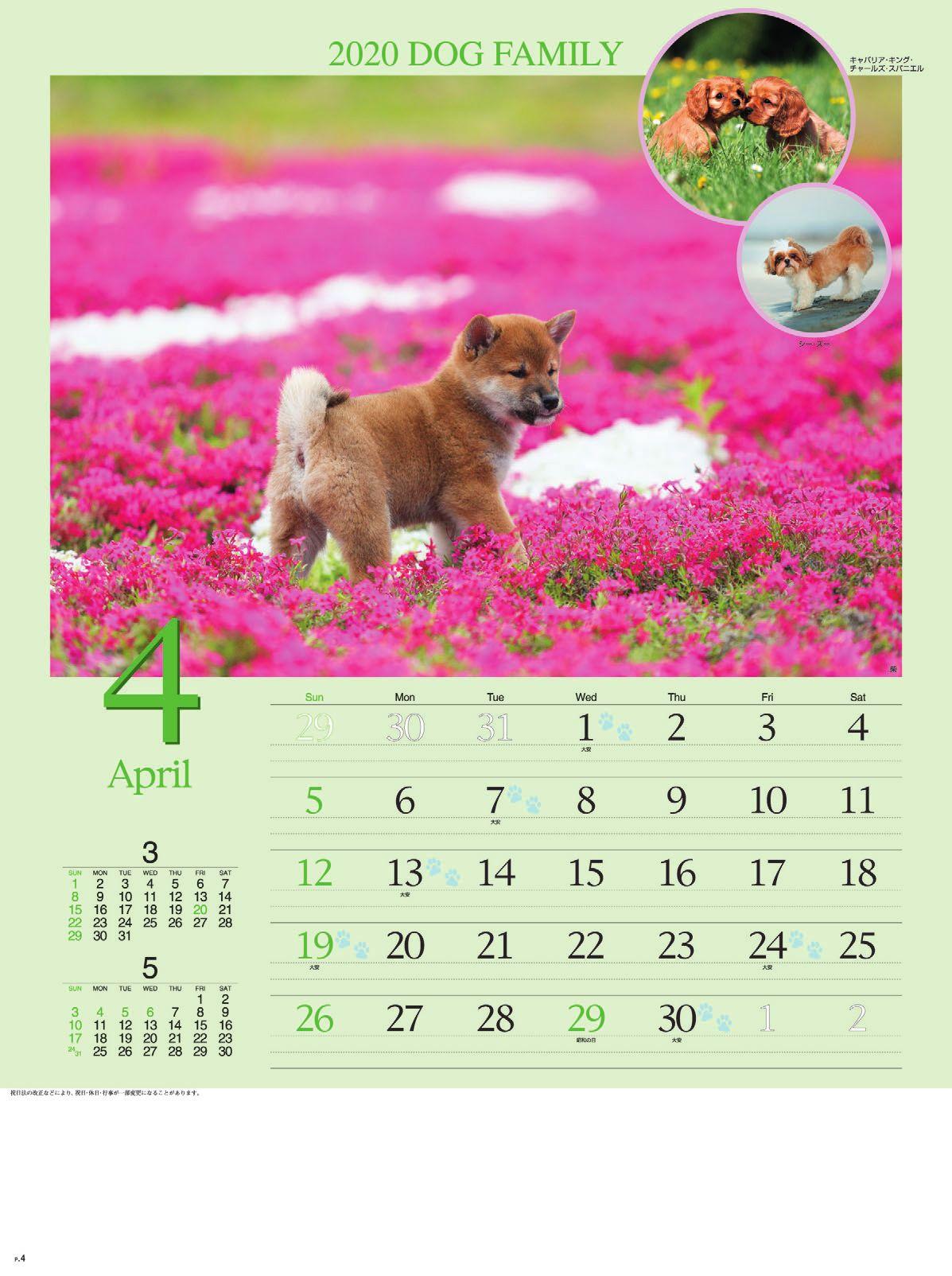 画像:柴 ドッグファミリー 2020年カレンダー
