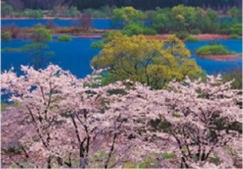 画像:4月 サクラ佐久釜房湖(宮城) 天地自然・森田敏隆写真集 2020年カレンダー