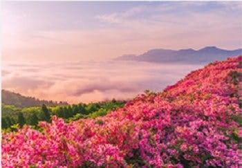画像:5月 ツツジ佐久長寿ヶ丘公園朝景(熊本) 天地自然・森田敏隆写真集 2020年カレンダー