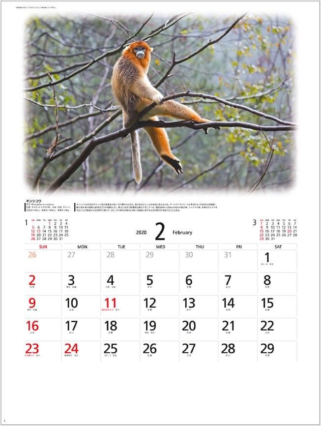 画像:キンシコウ 世界動物遺産 2020年カレンダー