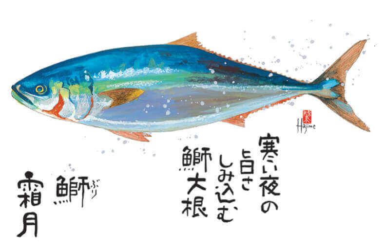 11月 ブリ 魚彩時記 -岡本肇- 2022年カレンダーの画像