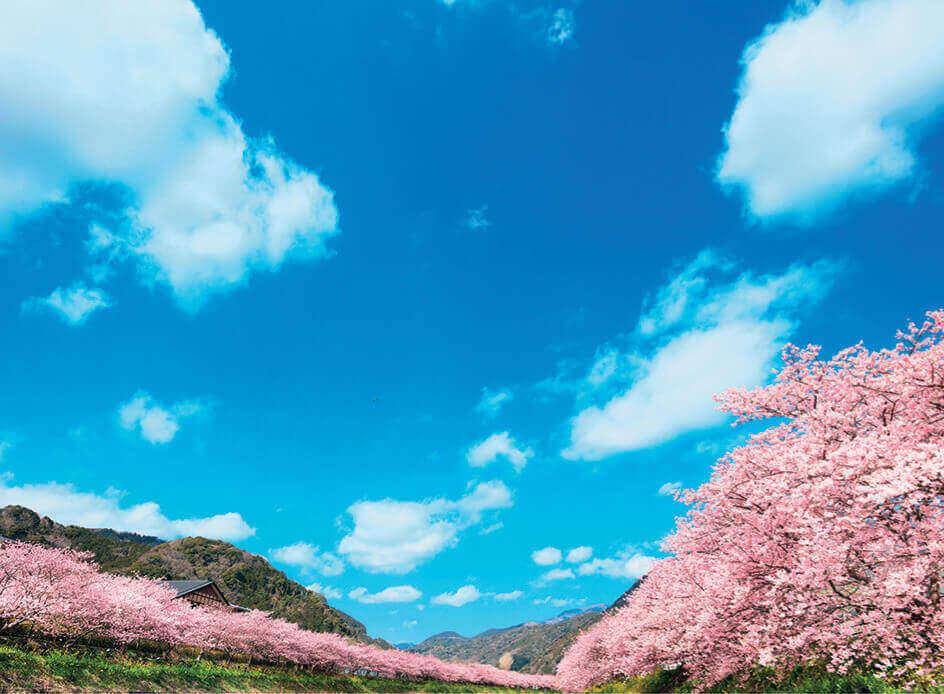 4月 桜並木と青空 SORA -空- 2022年カレンダーの画像