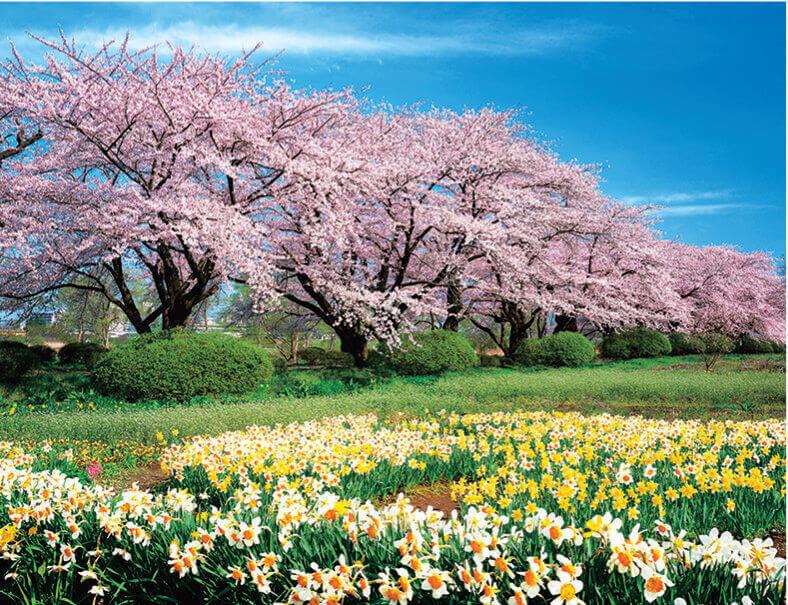 4月 北上展勝地(岩手) ザ・日本 2022年カレンダーの画像