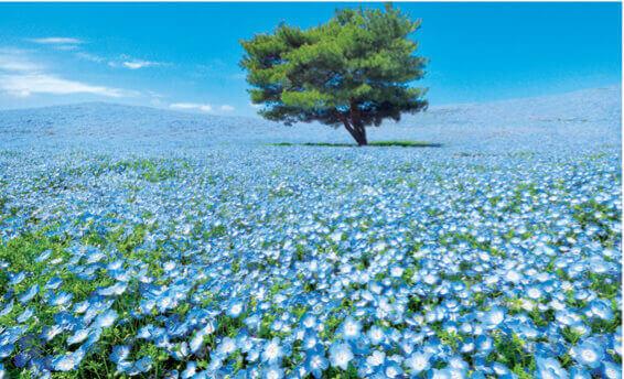 4月 ひたちなか市(茨城) フォーエバージャパン 2022年カレンダーの画像