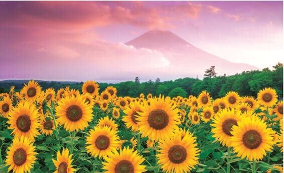 8月 山中湖村(山梨) フォーエバージャパン 2022年カレンダーの画像