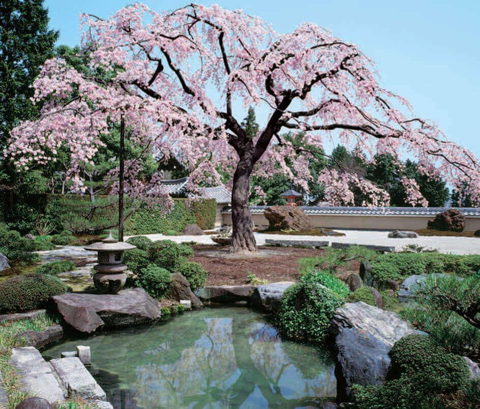 3-4月 正法寺(京都) 四季の庭 2022年カレンダーの画像